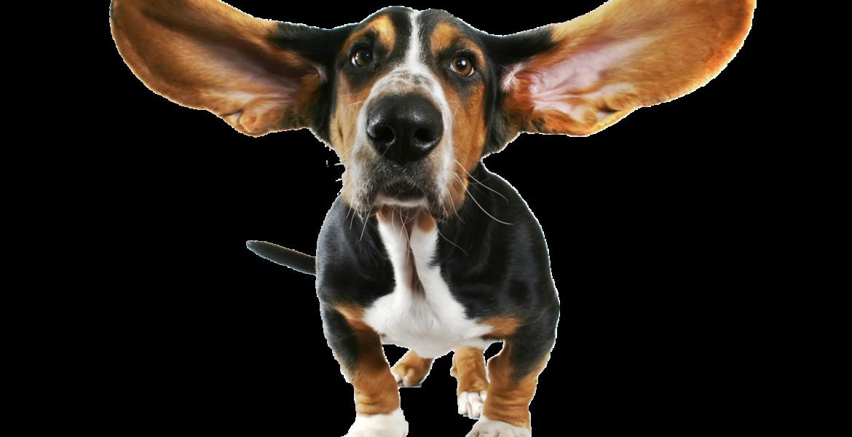 Pet Sitter Screening - ACUTRAQ